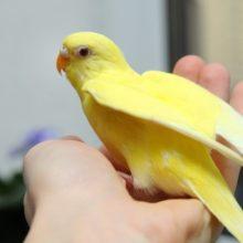 Как научить любого попугая говорить?
